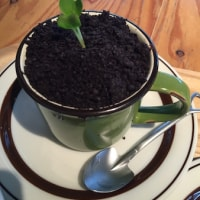 �ڥ��ե��ۣ����(��)�ޤǡ���BONSAI CAFE(�ߺϥ��ե�)�٢�