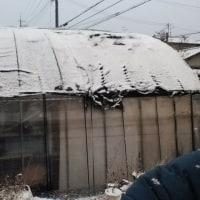 今日の朝は雪が