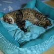 今日の猫どもと夏の気配とご質問におこたえしてと。