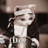 最近CMによく出てる「なめ猫バンド」