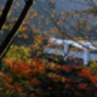 奥多摩むかしみちの紅葉 2009年11月15日