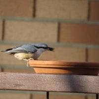 野鳥が見られる季節