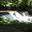 【北海道】清里町 斜里川の上流さくらの滝 サクラマスの遡上です。動画です~