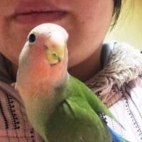 幸せの青臭い鳥?