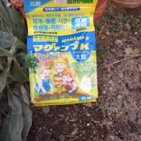 ボーダー花壇に元肥埋め