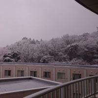 いわき市では雪が降りました(>_<)