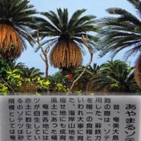 奄美大島の旅ー6