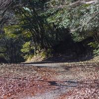 定点観測  in 森林公園