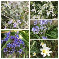 近所の花達
