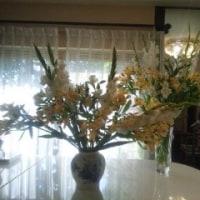 シャンソン歌手リリ・レイ LILI LEY     シャンソン稽古場で花達と戯れる