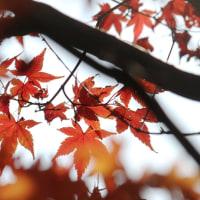 まだ、秋が残っていた! 【ひで某】