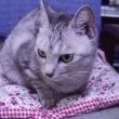 愛猫トッキー急逝