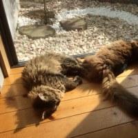 最近の猫団子事情・・・