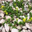 ちいさな庭の不思議な植物の世界
