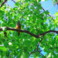 琵琶湖畔の鳥