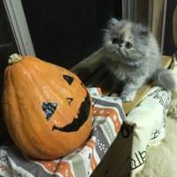 地震〜⁉︎ びっくり走り出す母猫