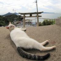 瀬戸内A島の猫たち 2016年 10月 その9