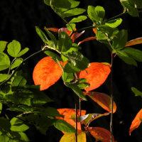 紅葉と昆虫