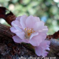 十月桜が咲く日に