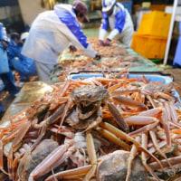ズワイガニ漁が解禁 日本海の冬の味覚
