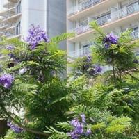 熱海の初夏を告げる花