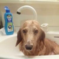バーディー緊急入浴!?
