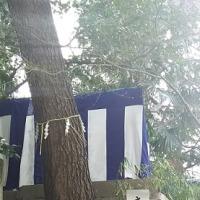 『安居神社』