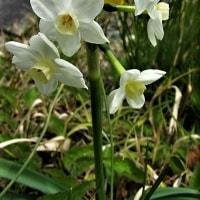 春を謳歌する路傍の花たち