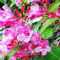 今日の散歩から(2017年5月5日)ハンカチノキ・ユリノキ他