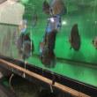 ディスカスマニア温室訪問