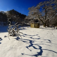 辰野町 枝垂れ栗森林公園雪景色