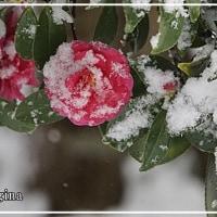 デジブック 『雪見に行こう』