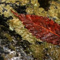 11月29日 落ち葉の彩