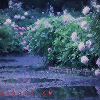 紫陽花シリーズ4 10句