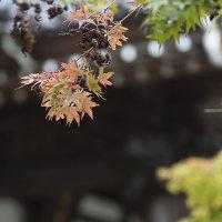 秋の深大寺界隈。