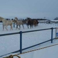「家畜改良センター十勝牧場・馬追」について考える