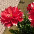 初収穫と大好きな花