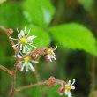 筑波山にしか咲かない花