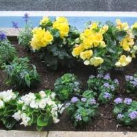 花の植え付けボランティア・・・・