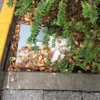 オサンポ walk - 名残り雪 a remnant of snow
