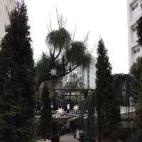 街ナカみどり     冬色の代々木ビレッジ