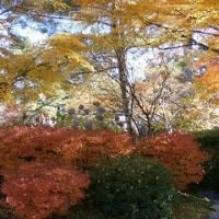 高野山の紅葉狩り