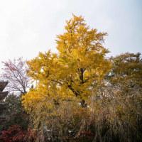 千葉県松戸市平賀 本土寺の紅葉 風景写真 / Sony α7RⅡ
