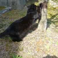梅の木に黒ネコなんてのも~