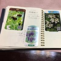 我が家の花の名前一覧帳
