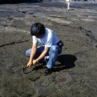 1990年の韓国恐竜足跡見学旅行 その4 フジツボ取り