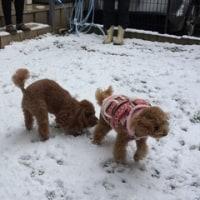 犬は喜び庭駆け回り