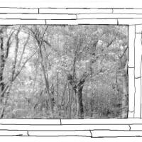 詩画・・・窓「風邪」