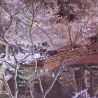 夜桜(高遠城址公園)