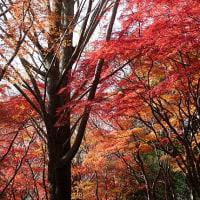 ♪鎌倉紅葉